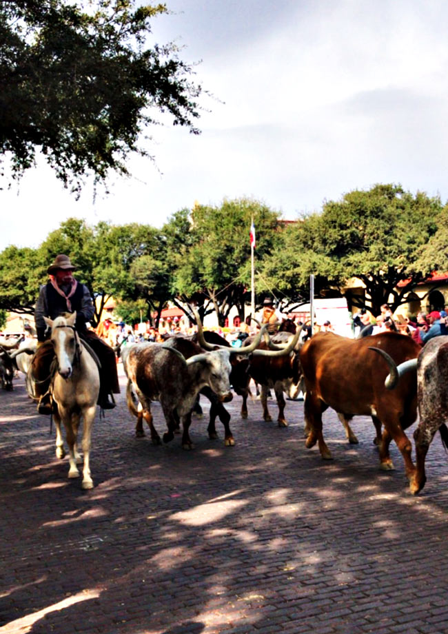 Fort Worth Stockyards are definitely one of many kid-friendly things to do in Dallas (or Fort Worth!). | spiritedandthensome.com