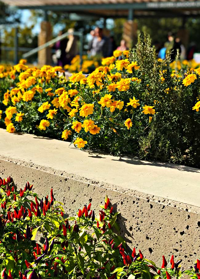 Flowers on a retaining wall at Dallas Arboretum and Botanical Garden! | spiritedandthensome.com