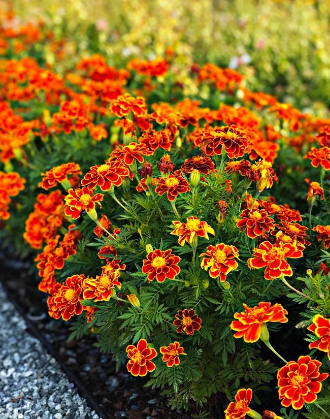 Orange Flowers at Dallas Arboretum and Botanical Garden! | spiritedandthensome.com