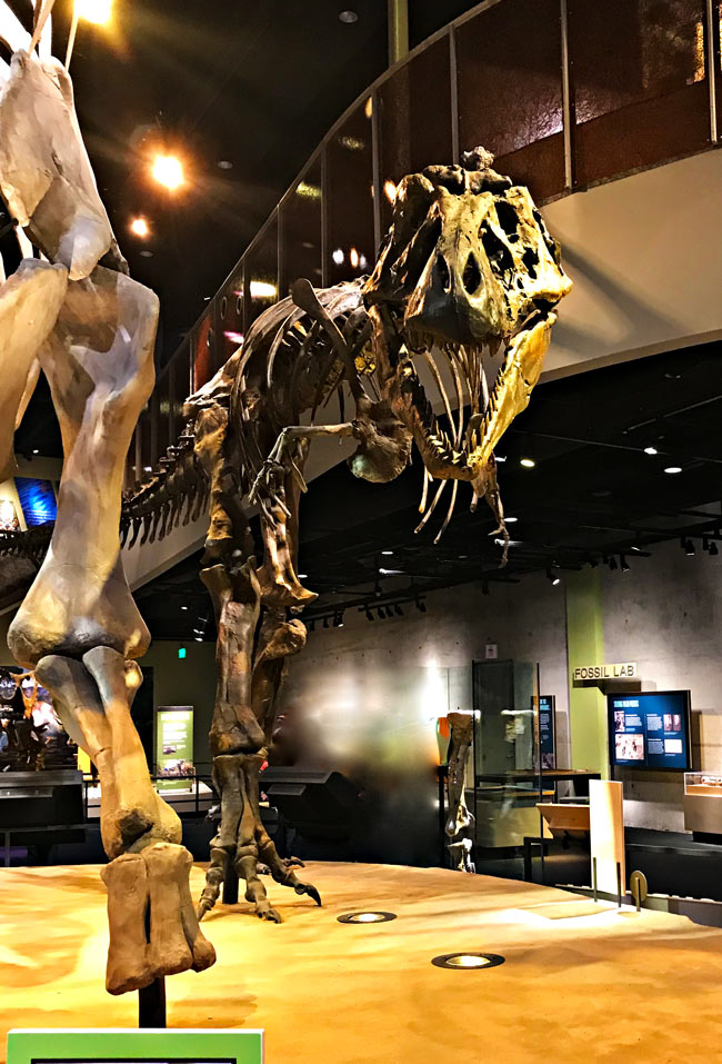 T-Rex at the dinosaur exhibit at the Perot Museum of Nature and Science! | spiritedandthensome.com