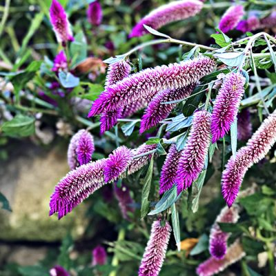 Beautiful purple flowers at Dallas Arboretum and Botanical Garden! | spiritedandthensome.com