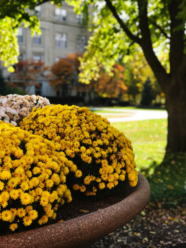 Fall flowers in bloom along the Anderson Sculpture Garden at Iowa State University! | spiritedandthensome.com