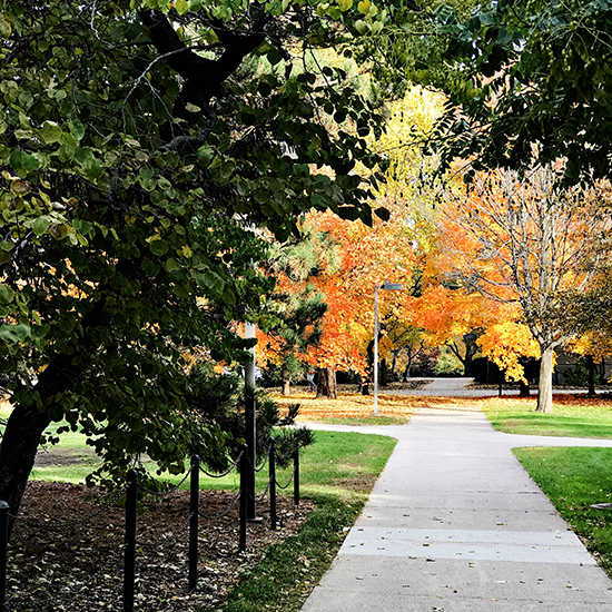 Fall leaves on a walk path on the Iowa State University in Ames, Iowa! | spiritedandthensome.com