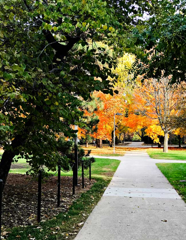 Luscious fall leaves on a walk path on the Iowa State University campus in Ames, Iowa! | spiritedandthensome.com