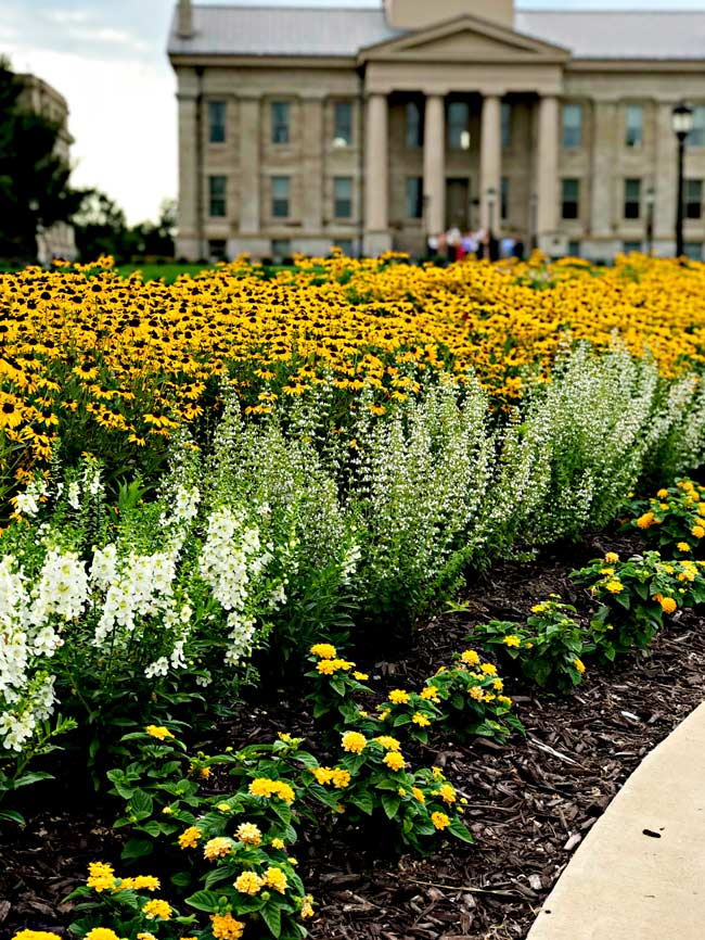 University of Iowa Campus in Iowa City, Iowa! | spiritedandthensome.com
