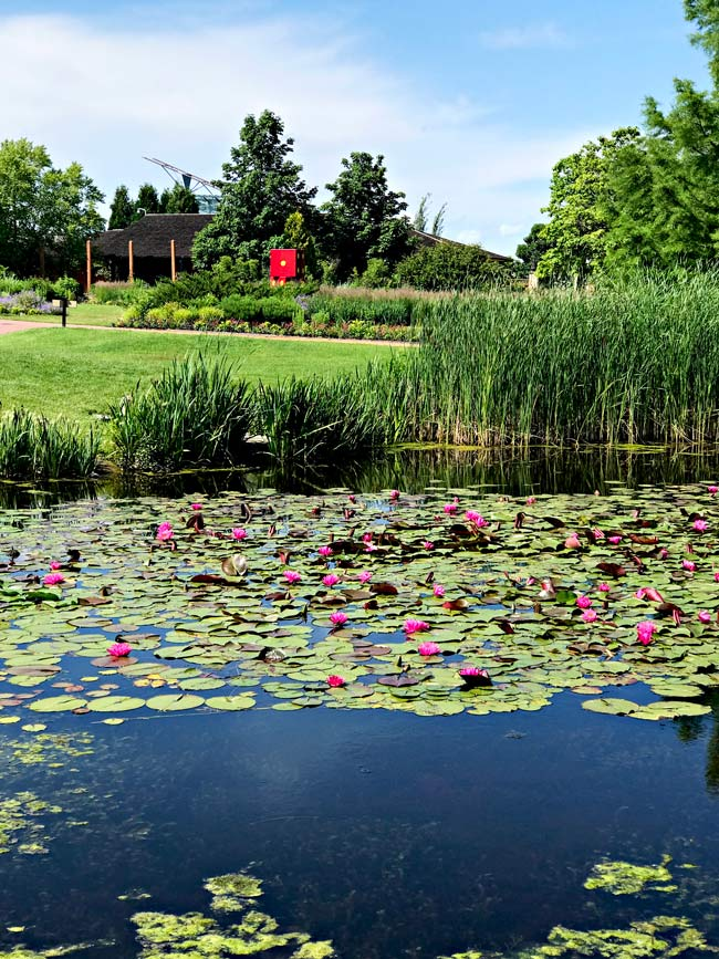 Pond at Reiman Gardens in Ames, Iowa! | spiritedandthensome.com
