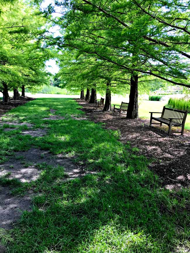 Sitting garden underneath blooming trees at Reiman Gardens in Ames, Iowa! | spiritedandthensome.com